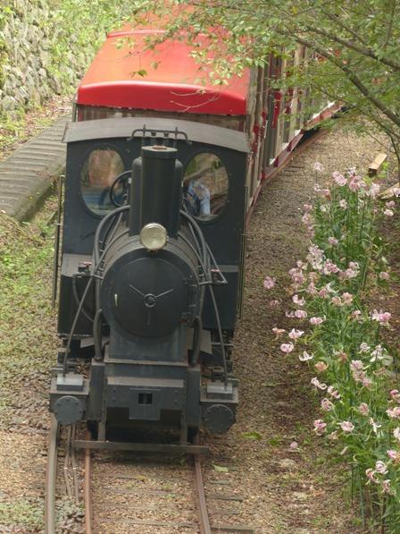 マイントピア別子 カノコユリ & 観光鉄道