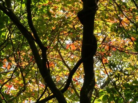 高縄山 少し紅葉