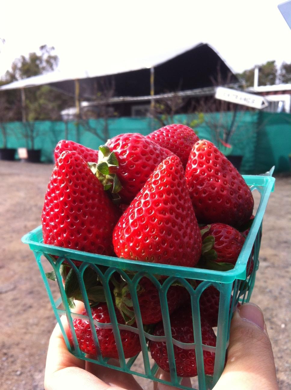 strawberryfealdsforeverswa2014.jpg