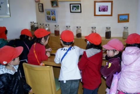 2007-09-21 平成25年度赤組フラワーミュジアム-26年2月19日 022 (800x534)