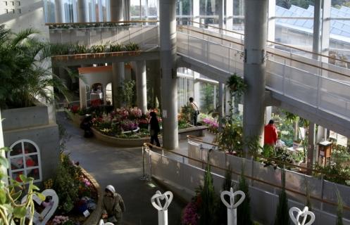 2007-09-21 平成25年度赤組フラワーミュジアム-26年2月19日 051 (800x515)