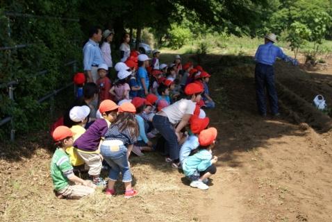 2014-05-09 26年度年長さつまいも苗植え・山王公園5月9日 006 (800x536)