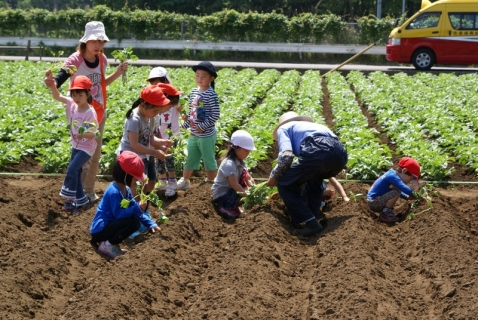 2014-05-09 26年度年長さつまいも苗植え・山王公園5月9日 022 (800x536)