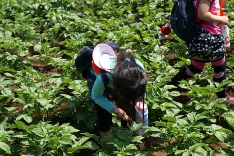2014-05-09 26年度年長さつまいも苗植え・山王公園5月9日 041 (800x536)