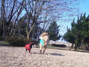 0224dan-kuro2.jpg