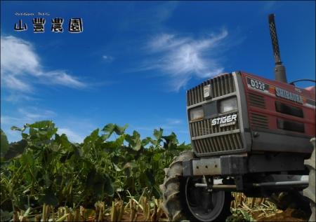 トラクターとサトイモ