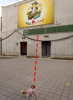阪神タイガースのキャッチフレーズ
