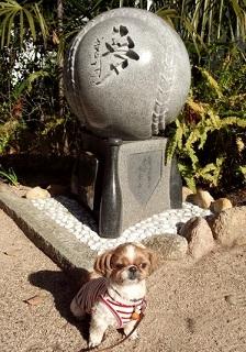 星野仙一監督の石碑