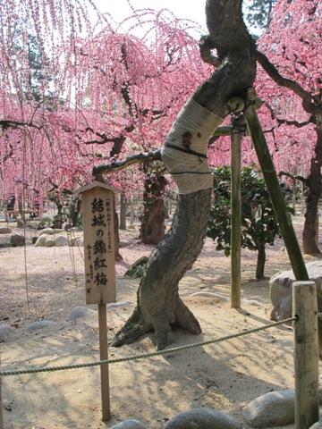 結城神社 024