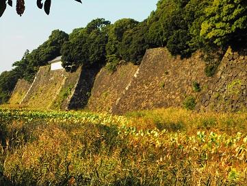 富士見多聞と蓮池濠④