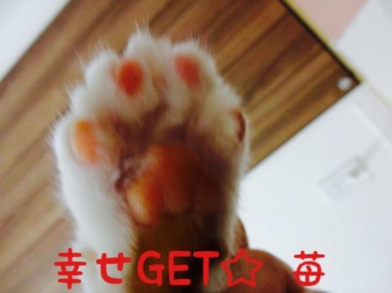 20140328235325407.jpg