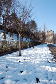 14.2.23雪景色八王子