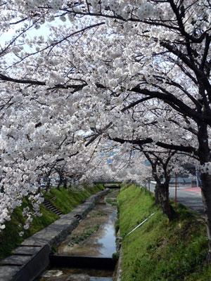 14.3.31柳田川