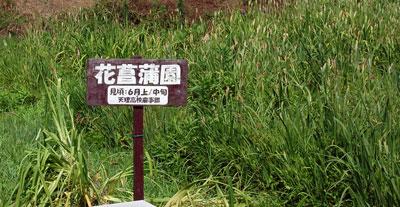 14.7.2花菖蒲園