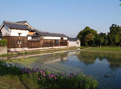 oomiyadorinoie20096.jpg