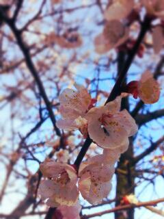 桜20140402