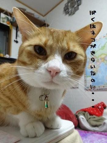 みぃ太猫嫌い