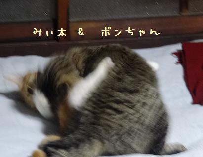 みぃ太&ボンちゃんプロレスごっこ2