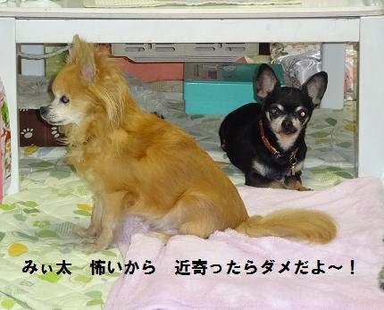 海&豆みぃ太に警戒