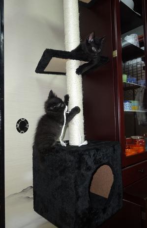 子ネコとキャットタワー