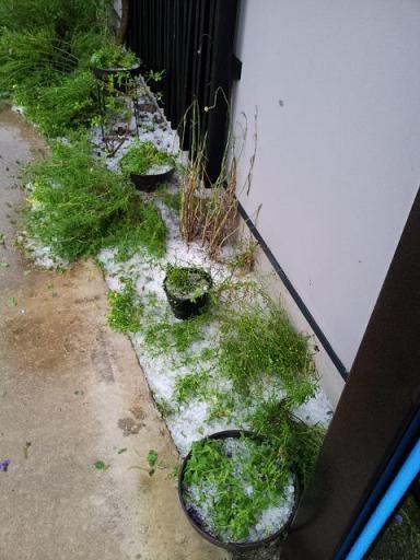 雹TRガーデン