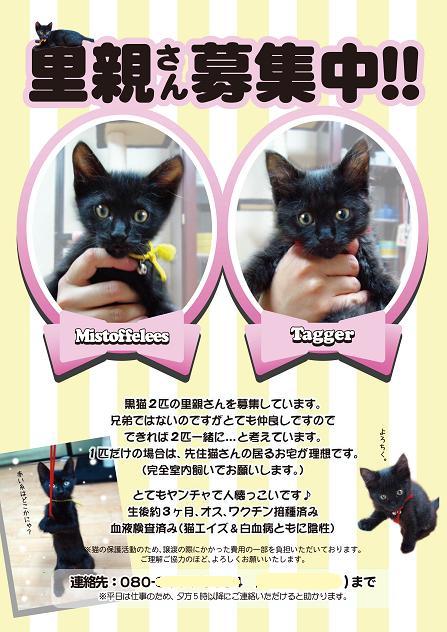 黒猫ポスター