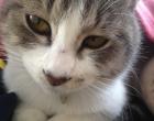 cat_1602_3.jpg