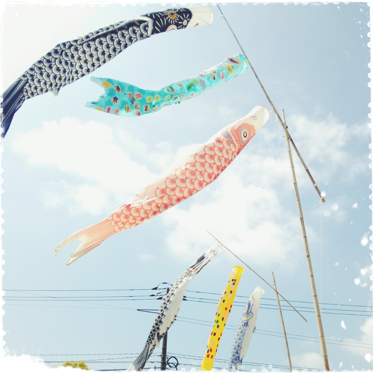 鯉のぼり51