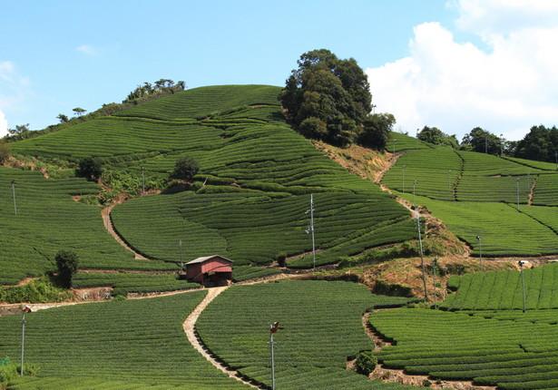茶源郷と呼ばれる和束町の風景