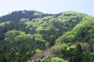 旧東海道:鎖雲寺前付近から湯坂路の尾根を望む