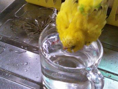 水浴び~♪