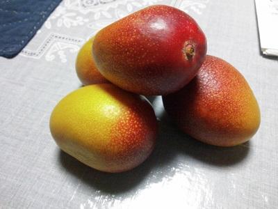 マンゴーの卵?