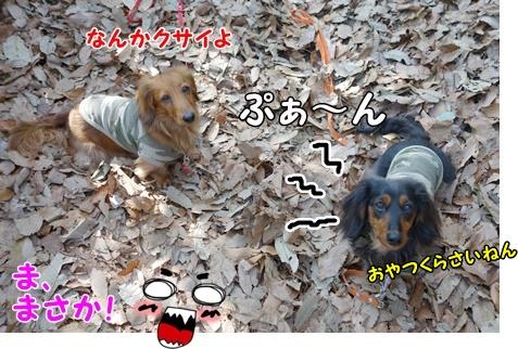 DSC05069_20140227190137d40.jpg