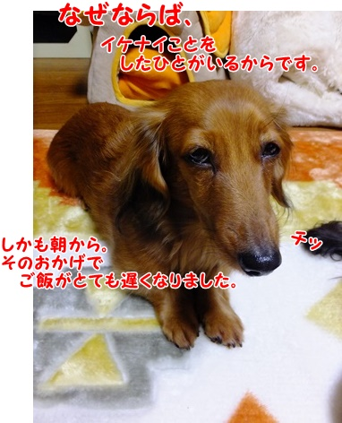 DSCF8847_20140226202335cad.jpg