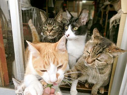 いつもだったらねぎが一番に猫草欲しさに寄って来ますんです。