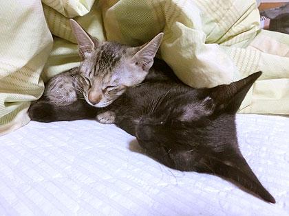 兄妹で添い寝