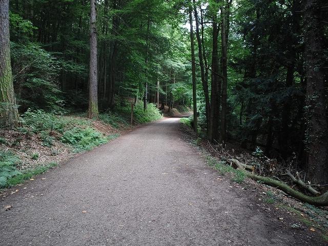 Heidelberg3 170