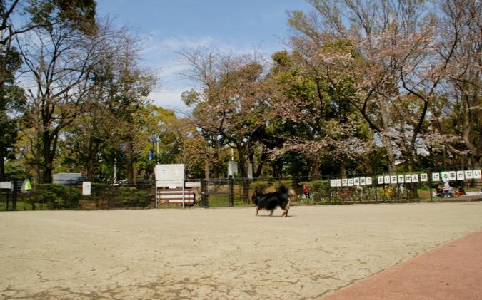 DSC02883本日桜