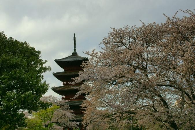 DSC03384池上桜