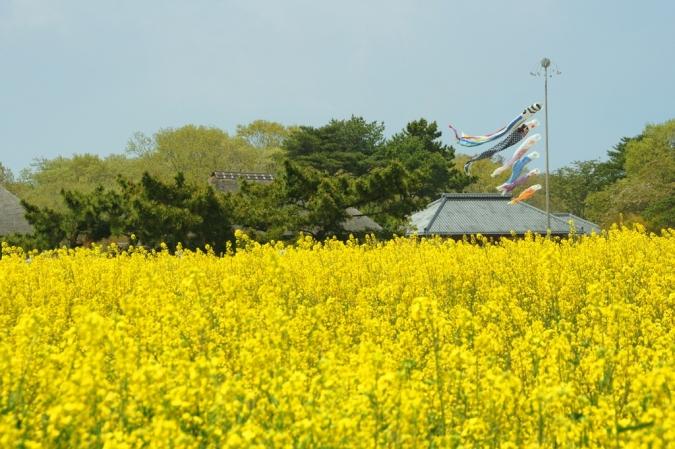 DSC04363かいひん公園