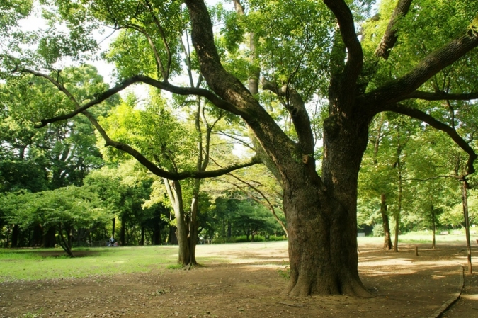 DSC02079林試の森