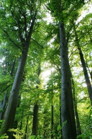 DSC02071林試の森