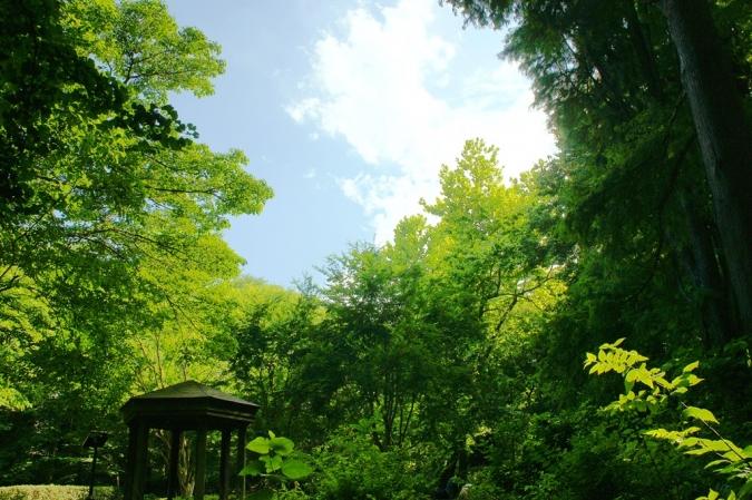 DSC02069林試の森