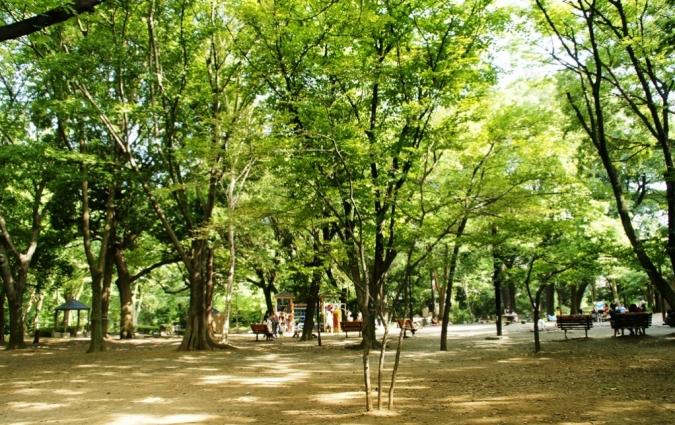 DSC02062林試の森