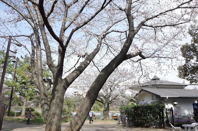 千葉公園1