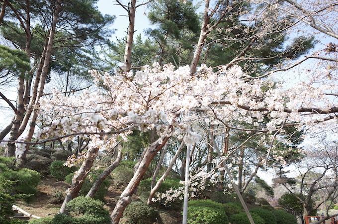 千葉公園3