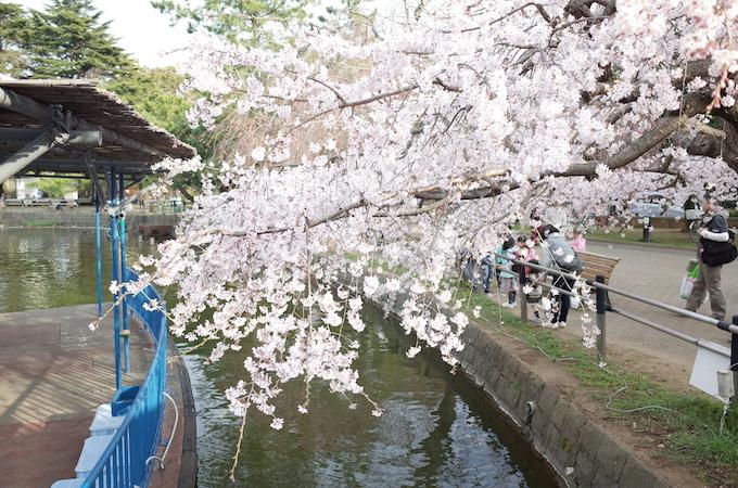 千葉公園9
