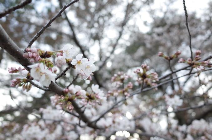 千葉公園11