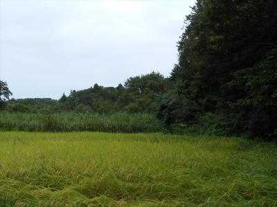 2014_0904_shimoohwada_0016_R.jpg