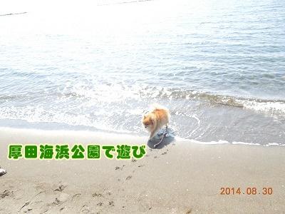 2014083105.jpg